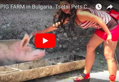 Visiting a Pig Farm in Bulgaria